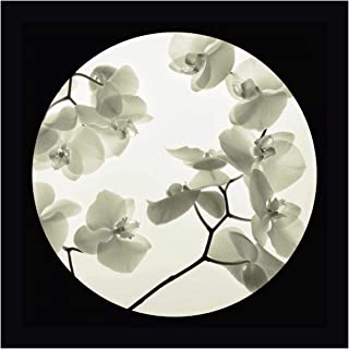 Orchid I by Ian Winstanley 24