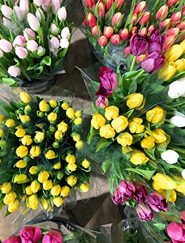 20 x Mixed Tulips Bulbs All Colours (Free UK Postage)