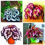 100pcs / bag semillas de flores las semillas de begonia bonsai balcón patio coleo plantas de semillas de begonia en maceta para el hogar mezcla de jardín