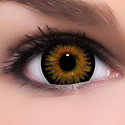 Circle Lenses braune Bambi Brown ohne Stärke + Behälter I 15mm I weich I 3 Monate anwendbar