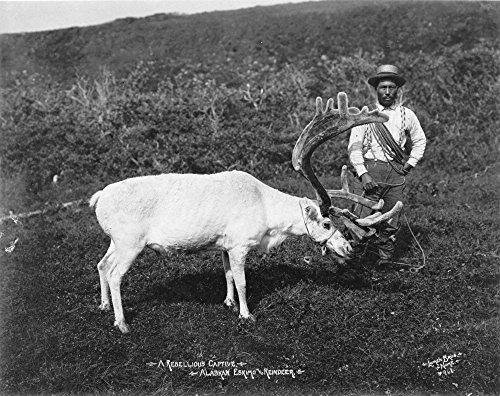 The Poster Corp Inuit Man With Reindeer. /Nan Alaskan Inuit Man With A Captive Reindeer. Photograph C1920. Fine Art Print (45.72 x 60.96 cm)