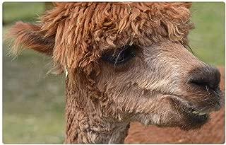 Tree26 Indoor Floor Rug/Mat (23.6 x 15.7 Inch) - Alpaca Wool Lama Peru Animal Livestock Creature