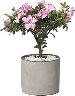 Best round concrete planter molds Reviews