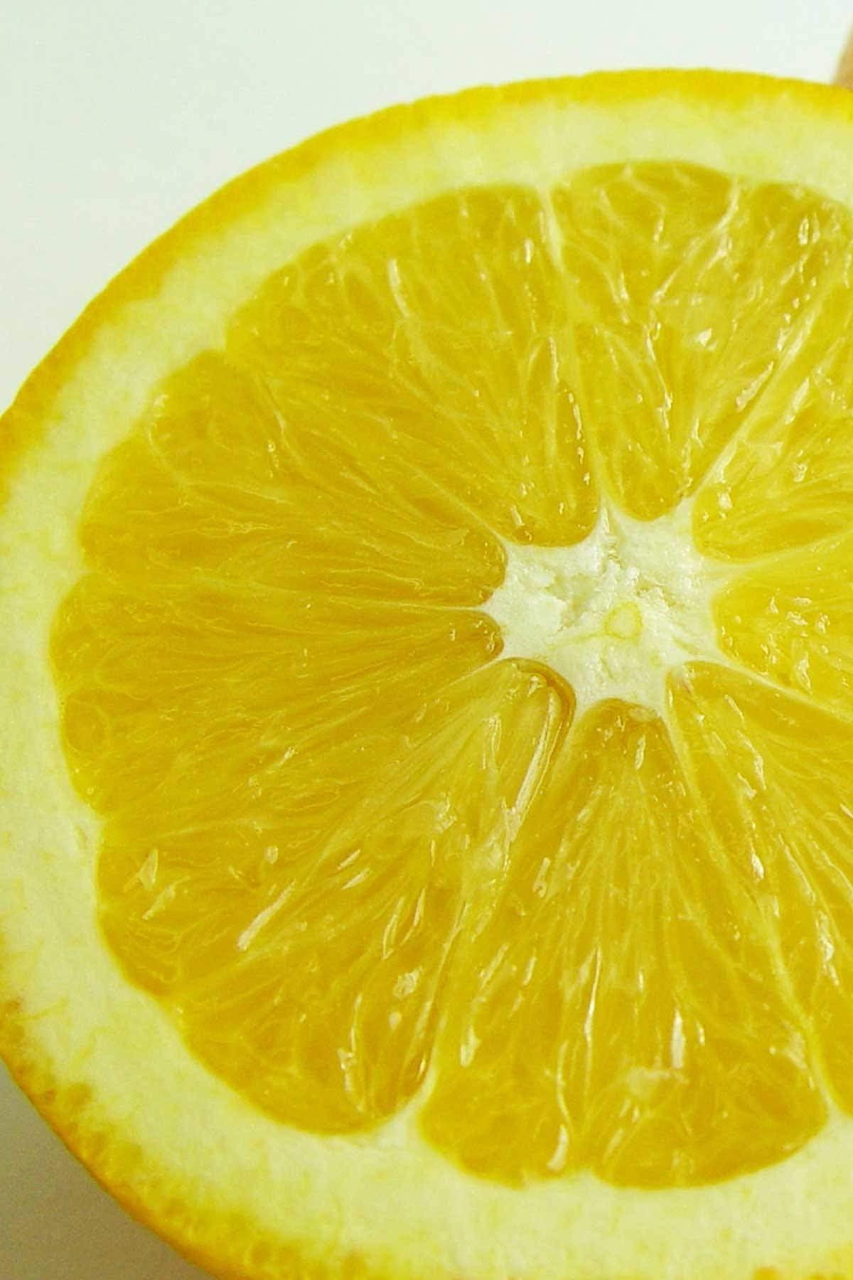 Dwarf Minneola Tangelo Tree Honeybell Hybrid Citrus Excludes: CA,TX,LA,Az
