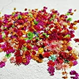 HKMB Flores secas Reales para Arte Artesanal Resina epoxi fabricación de Velas joyería Cubierta de Vidrio Relleno de Bola Accesorios de Flores secas