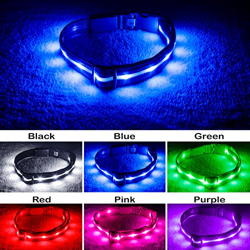 Blazin' Safety LED Dog Collar – USB Rechargeable with Water Resistant Flashing Light – Large Blue