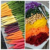 lai-lyq 500pcs semi di carota di colore misto delizioso ortaggio frutta cortile casa fattoria cortile pianta giardino decorazione semi di carota
