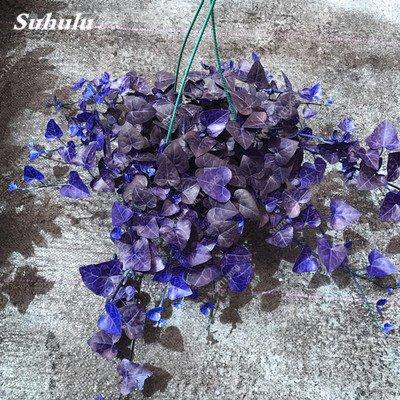 Rare coloré semences de fleurs à feuilles persistantes en rotin Escalade Plante Easy Grow extérieur Bonsai Hanging Panier usine les plus populaires 50 Pcs 8