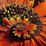 100 piezas de margaritas – semillas de flores de jardín Bonsai Planta Home Office Decor – 4# small 2#