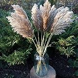 60cm Pampas Gras Getrocknete Blume Reed Hochzeit Dekoration Heu Herbst Home Natürliche Dekoration Blumenstrauß Retro Blume Getrocknete Blumen (Color : 20 Pieces, Size : 60cm) - 3