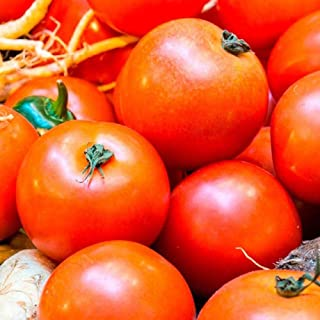 Ultra Sweet F1 Hybrid Tomato Seeds - good yields of 10 oz bright red beefsteak !(25 - Seeds)