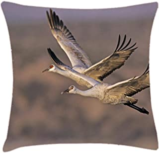 NYWDZ Sandhill Crane, Grus Canadensis Throw Pillow Cover 18x18 Inch Two Sides Design Printed Pillowcase