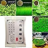 ミニ多毛草:42AB Db7C水草の種子水生植物の種子 ビューティガーデン