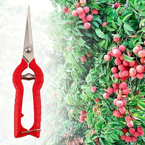 Plante élagage Ciseaux Jardin Cisailles Cutter Fleur à la main Sécateur Outil DIY Bon Marché Prix Hot à vendre