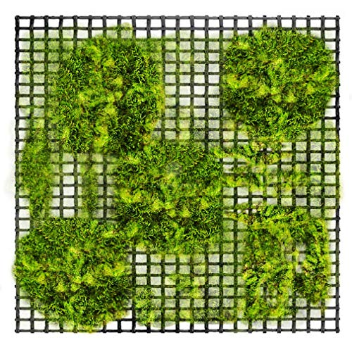 Best Moss For Aquarium Carpet