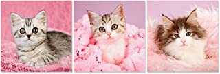 Best lovely cat pictures Reviews