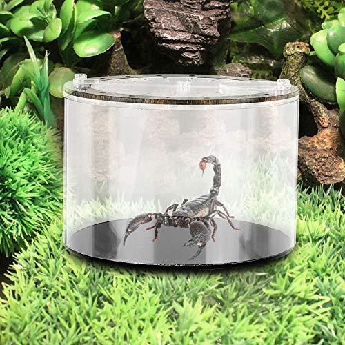 Pssopp Insect Box Zuchtbehälter Spinnenzucht mit Deckel, Ökologische Landschaft Flasche Runde Klettern Insect Feeding Box für Spinnen Eidechsen Schildkröte