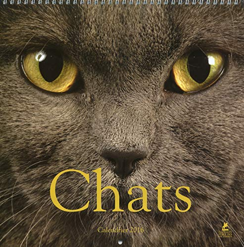 Chats Calendrier 2016