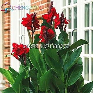 10 piezas de Canna Semillas hermosa semilla de flor del lirio de la mezcla de Indica plantas de jardín bulbos de flores al aire libre en maceta de Bonsai Flores. Regalo Inicio