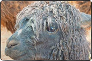 Alpaca Animal Face Llama Wool Area Rugs Super Soft Non-Slip Carpet for Bedroom Living Room Size 36