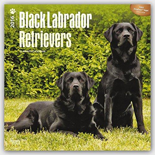 Black Labrador Retrievers 2016 - Schwarze Labradore - 18-Monatskalender mit freier DogDays-App: Orig