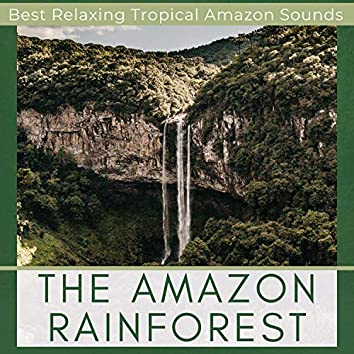 The Amazon Rainforest - Best Relaxing Tropical Amazon Sounds, Saving Earth
