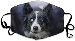 Sponsored Ad - Reusable Unisex Breathable Bandana Dogs Border Collie Glance Face Protective Covering Gear
