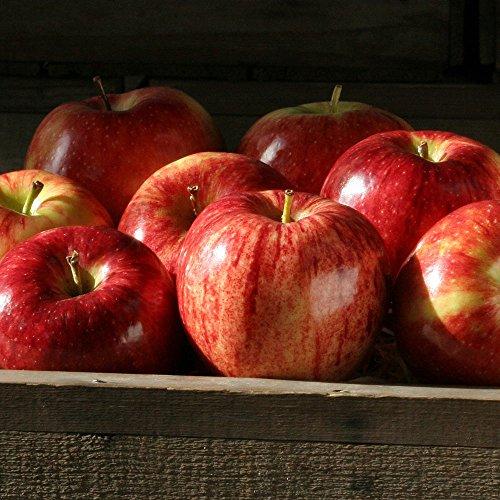 Gala Apples - 4 lbs - The Fruit Company