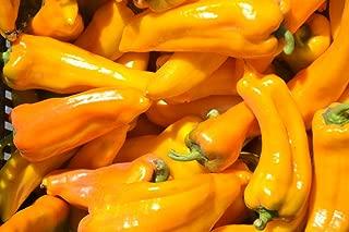 golden treasure sweet pepper