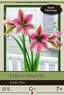 Best send amaryllis plant Reviews