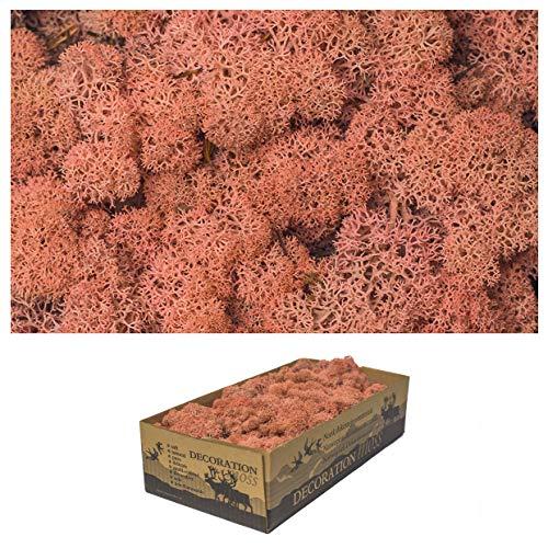 1 Kiste Echtes Moos - Natur Dekomoos zum basteln in verschiedenen frischen Sorten - DIY - Islandmoos, Plattenmoos, Bollenmoos, Hügelmoos Sphagnum Moos (1x Island Moos Rosa)
