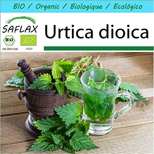 SAFLAX - Kit cadeau - BIO - Grande ortie - 2000 graines - Avec boîte cadeau/d'expédition, autocollant d'expédition, carte cadeau et substrat de culture - Urtica dioica