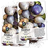 Seed Needs, Purple Milpa Tomatillo (Physalis ixocarpa) Twin Pack of 50 Seeds Each Non-GMO