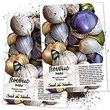 Seed Needs, Purple...image