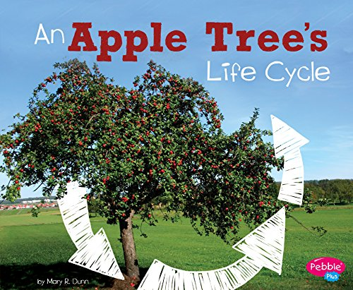 Best plant an apple tree
