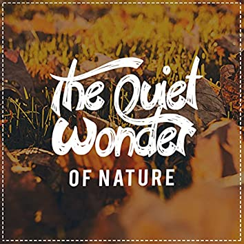 The Quiet Wonder of Nature
