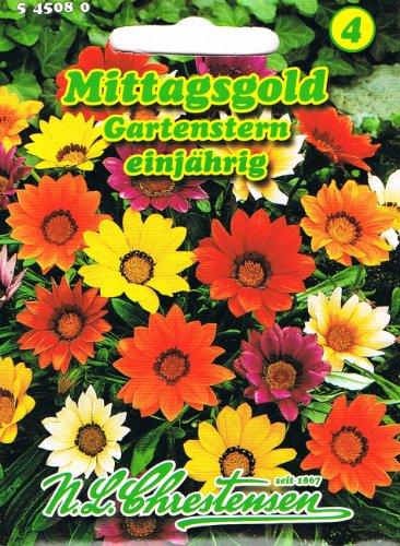 Mittagsgold Gartenstern , einjährig,...