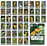 Nestinar. Cartas Florales. Las 38 flores descubiertas por el Dr. Edward Bach