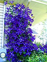 100pcs/bag Clematis Seeds Flowers Clematis Vine Seeds Perennial Flower Seeds Climbing Clematis Plants Bonsai Pot Garden Pl...
