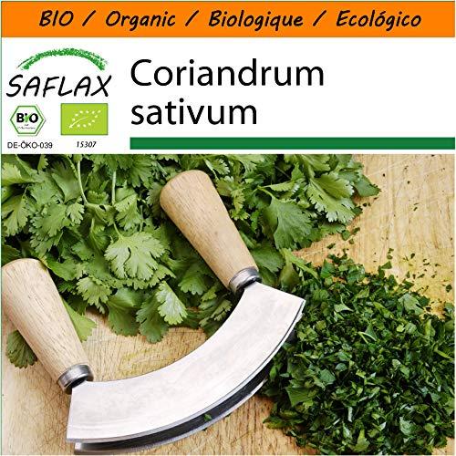 SAFLAX - Jardin dans le sac - BIO - Coriandre - 150 graines - Avec substrat de culture dans un sac de levage facile à manipuler. - Coriandrum sativum