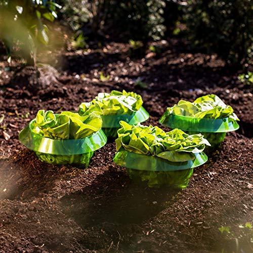 UPP Salatringe | Effektiver Schneckenschutz für Ihre Salatpflanzen und Kohl | Schneckenabwehr ohne Chemie | Schneckenkragen aus Plastik [5 STK.]