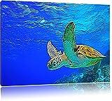 Green Sea Turtle, Kona, Hawaii USA Bild auf Leinwand, XXL