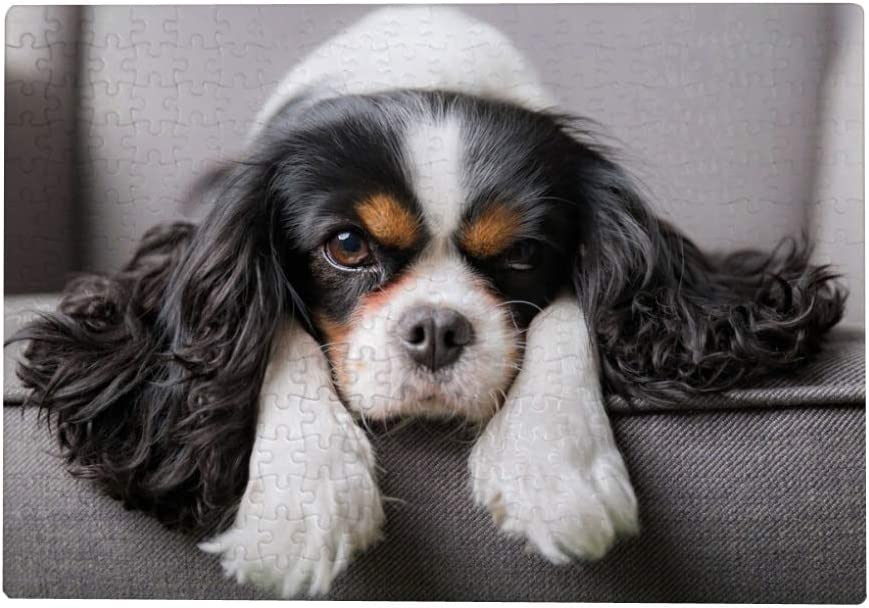 1000 Piece Jigsaw Puzzles for Adults - Cavalier King Charles Spaniel Dog