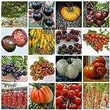 160 graines de tomate dans 16 variétés de substances nutritives rares et riche, COLLECTION 1: 10 POMODORO GIGANTE ITALIANO, 10 CILIEGINO NERO, 10 BIG RAINBOW,10 BLACK KRIM, 10 CIOCCOLATO STRIPES,10 TOMATO BANANA,10 BLACK PRINCE,10 CERISE,10 CILIEGINO BLU', 10 COSTOLUTO FIORENTINO,10 GIGANTE BIANCO,10 TOMATO GIANT,10 PIENNELO DEL VESUVIO,10 CUOR DI BUE,10 PACHINO,10 DATTERINO