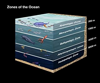ocean zones poster