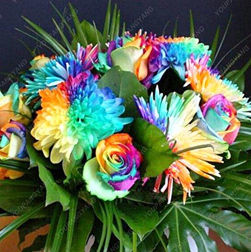 100 piezas Novedades Semillas crisantemo del arco iris rara flor color de la semilla bonsai margarita para el jardín de DIY siembra: Amazon.es: Jardín