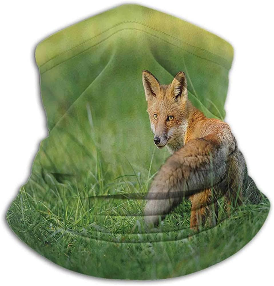 Scarfs For Women Fox Decor For Men Women Outdoors/Festivals/Sports The Red Fox with Fluffy Tail Looking behind in Grass Digital Image Fern Green and Ginger