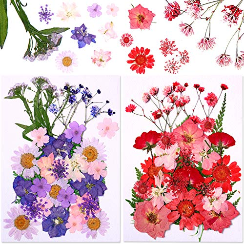 61 Pieces Natural Pressed Dried Flowers Leaves Set Red and Purple Petals Daisy Mixed Decorative Real Dried Flowers for DIY Resin Candle Making Jewelry Nail Art Floral Decors
