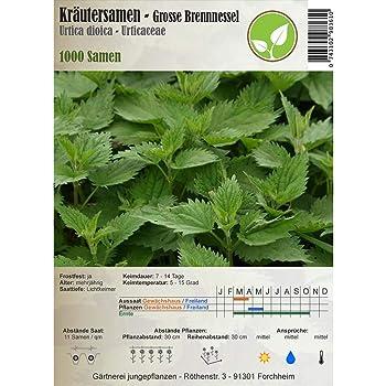 Semillas de hierbas - Ortiga grande/Urtica dioica 1000 semillas ...