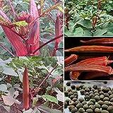 Semi, Catkoo 100Pcs Rari semi di gombo rosso Gumbo Garden Courtyard Outdoor Vegetables Plants - Red Okra Seeds